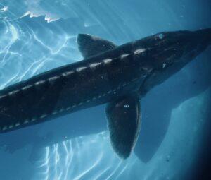 海遊館のふれあい広場のサメはちゃんと触れる?
