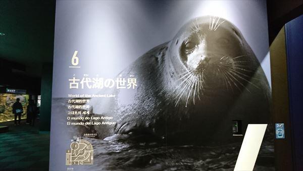 琵琶湖博物館 古代湖の世界