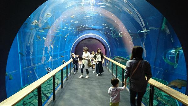 琵琶湖博物館で雑誌によく載っているシーン
