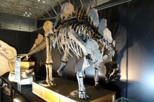 福井恐竜博物館は幼児や子供だと怖い?回り方や兄弟で回る時のおすすめ対処法!